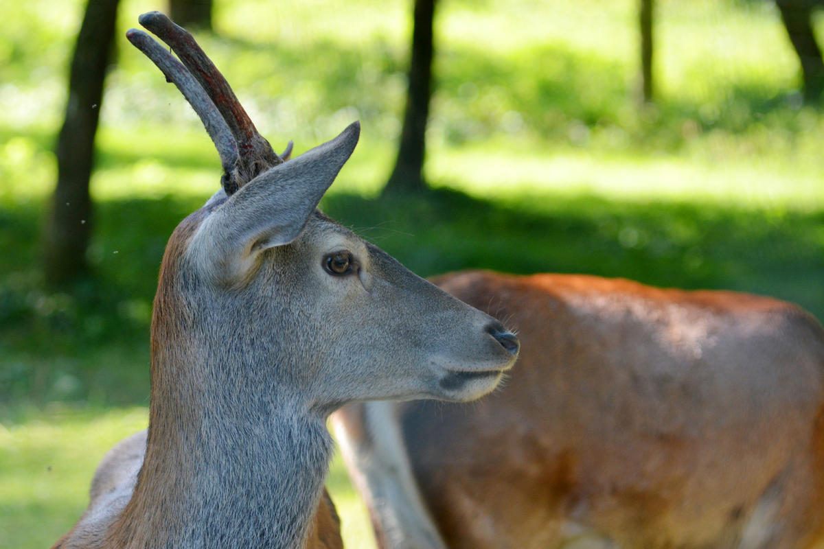 Wildpark am Baggersee